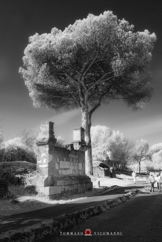 08-Tommaso-Vicomandi