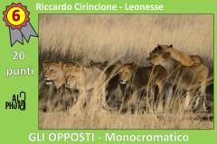Monocromatico6